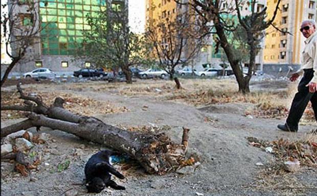 پولدارها به جان باغ های تهران افتاده اند!